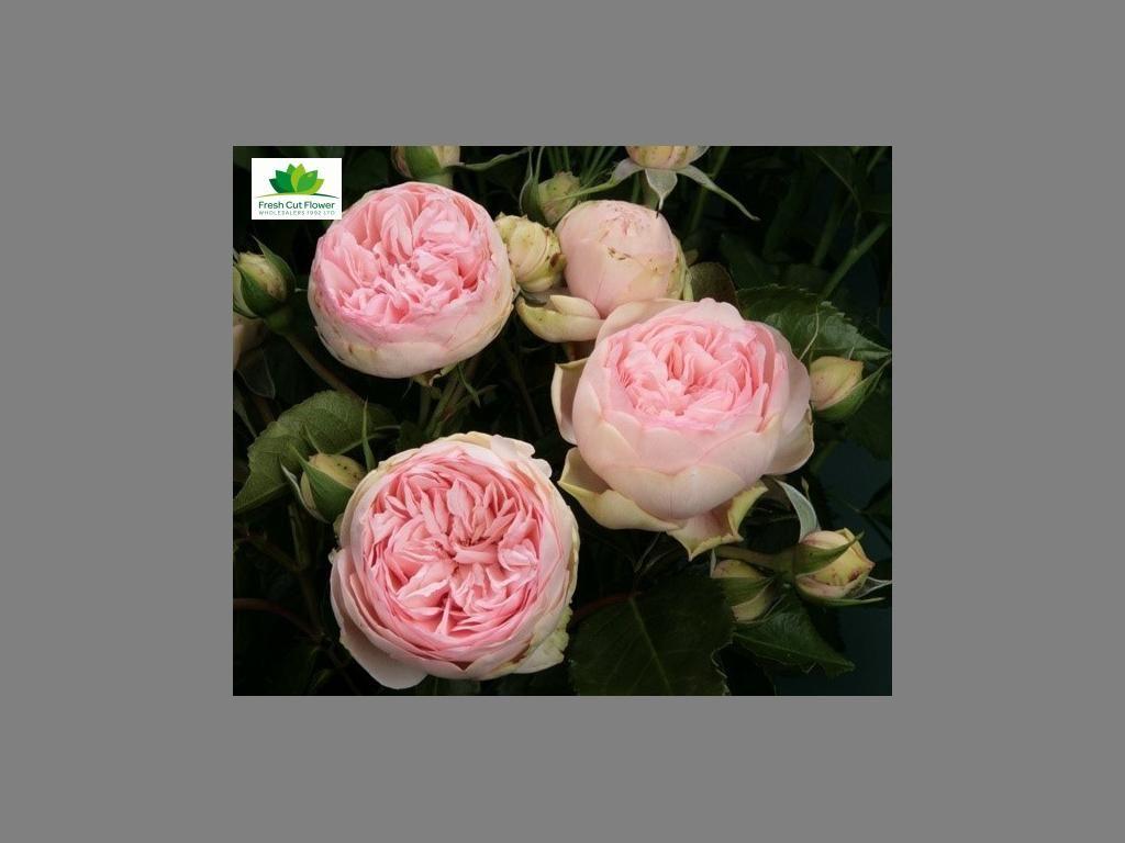 Fresh Cut Flower Wholesalers